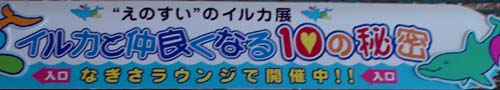 イルカと仲良くなる10の秘密-1.JPG