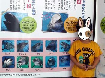 イルカと仲良くなる10の秘密.JPG