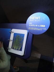 新江ノ島水族館#8.jpg