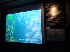 新江ノ島水族館#9.jpg