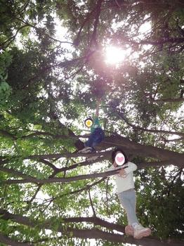 木登り.JPG